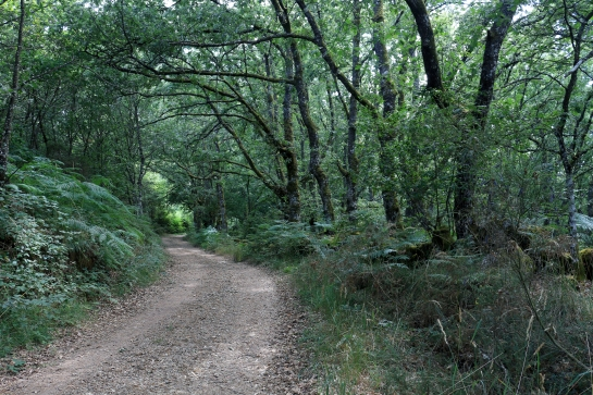 The right path in the oak forest